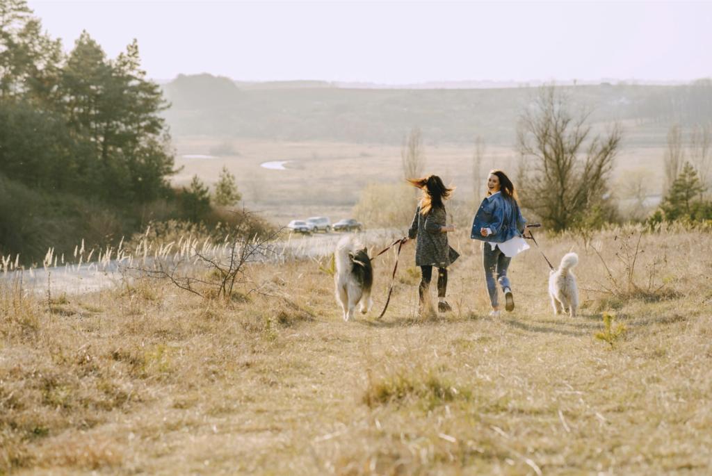 Passeggiata con i cani ai tempi della pandemia